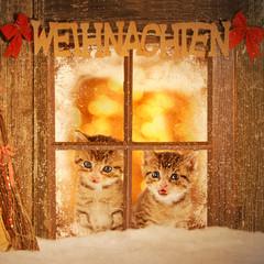 zwei junge Weihnachtskätzchen