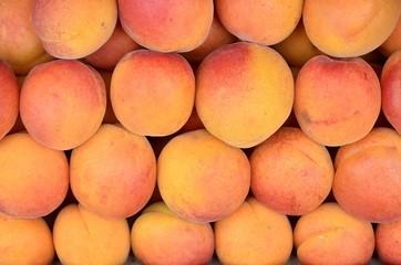 Albicocca   -  apricot