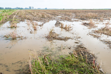 Flooded maize stubble field