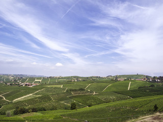 Monferrato vineyards hills. Color image