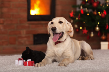 Family pets receiving gifts for Christmas