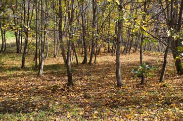 alberi in autunno