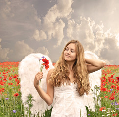 Christmas: Angel on vacation in a field of red poppies :)