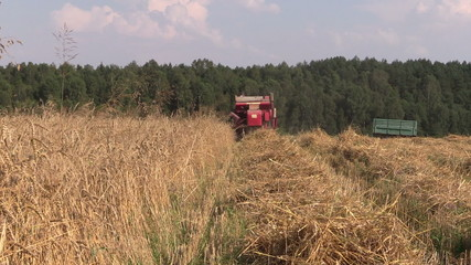 Back of combine harvester cut ripe wheat grain field