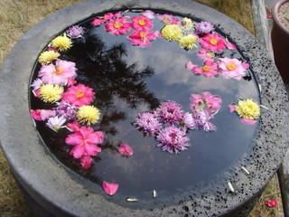 작은 인조 연못