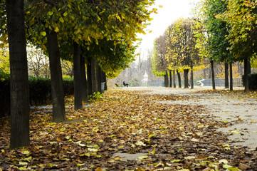 jardin des tuileries automne