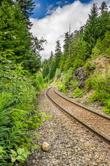 Curving Railway Through a Forest