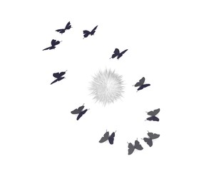 Cirkelende vlinders rond novaster