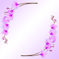 Floral abstract background, orchids isolated on a white