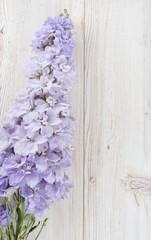 delphinium on wooden surface
