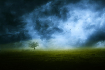 Lonely tree and storm clouds