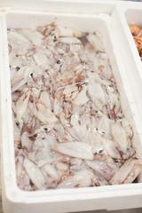 squids market