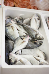 fish in the market