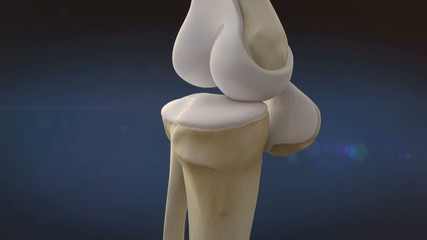 knee, bone
