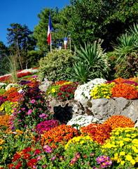 fleurs de saison-chrysanthèmes