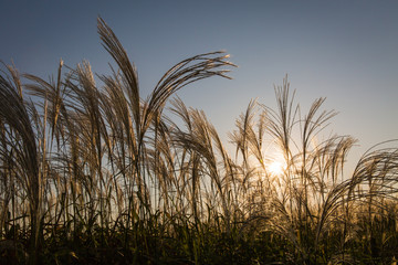 Autumn dry grass and sun