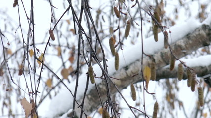 The video shows branch of a tree in the snow