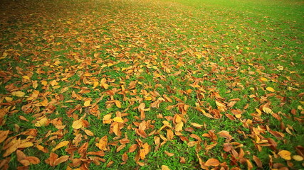 Autumn colored leaves on green grass in park