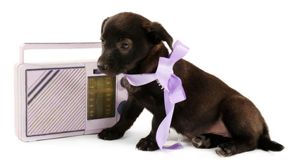 Black puppy playing with ribbon and radio beside it isolated