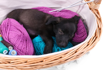 Puppy sleeping in a basket with yarn and thread isolated