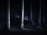 Spooky dark forest - 72028345