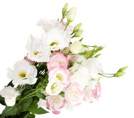 Beautiful eustoma flowers, isolated on white
