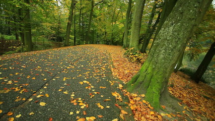 Autumn pathway alley. Park road landscape with the autumnal tree