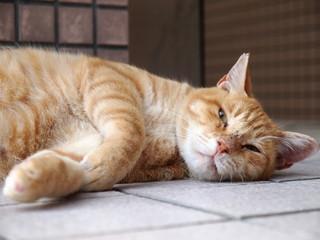 床に寝転がる茶トラ猫