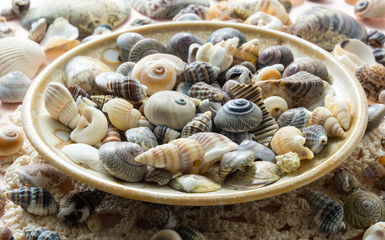 Decorative seashell dish