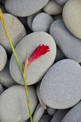 Tropical flower, exotic hibiscus and pebbles