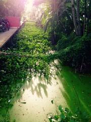 walkway bridges covered in water hyacinth