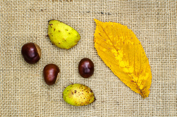 Sweet chestnuts still life