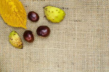Sweet chestnuts design