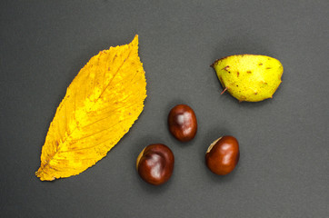 Sweet chestnuts still life at dark