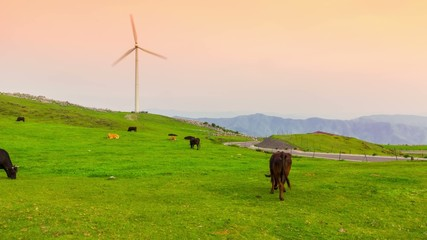 Time lapse of grazing cows with windmills