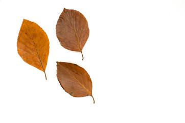 Autumn decoration on white