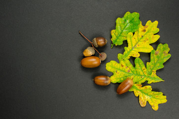 Colorful leaves and acorns