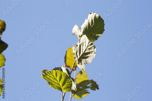 canvas print picture Blätter