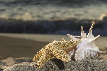 Shells on the beach