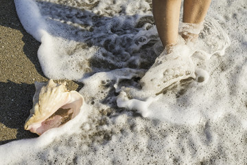 Shells on the beach. Foots in water