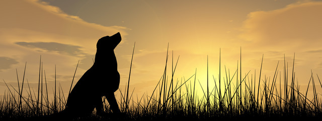 Dog silhouette in grass at sunset banner