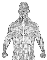 muscle man super flying line drawing