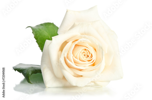 Plexiglas Rozen rose isolated on white background