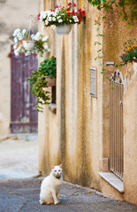 Street with cat in French Provence