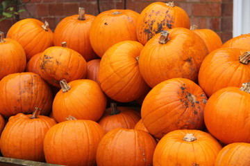 A Display of Freshly Picked Bright Orange Pumpkins.