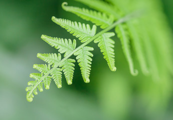 fern with shallow depth of field on gradient background
