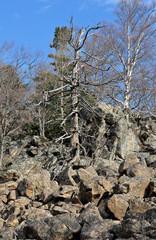 Landscape in mountain taiga 15
