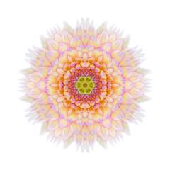 Pink Concentric Chrysanthemum Mandala Flower Isolated