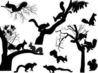 black squirrels and trees branches