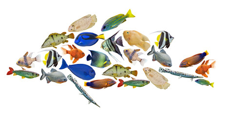composite bright fish isolated on white